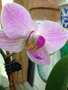 Randell 3D Printed T-Shirts Pink Purple Phalaenopsis Moth Orchid Flowers Buds Green Leav