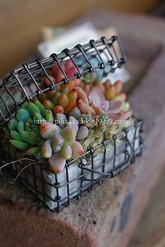 neat wire box - succulents
