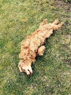 #nature#dog#spaniel#love#<3#:)#green#braun