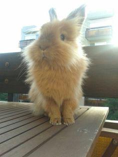 Bunny, Pet, Rubi