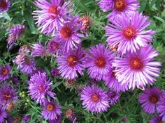 Native Plants of Pennsylvania –Resources