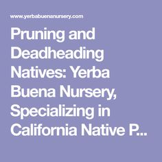 Pruning and Deadheading Natives: Yerba Buena Nursery, Specializing in California Native Plants and Ferns