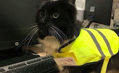 This is Felix, the official pest control manager at Huddersfield train station in West Yorkshire. She has a proper job title, a high-visibility vest, AND a name badge.