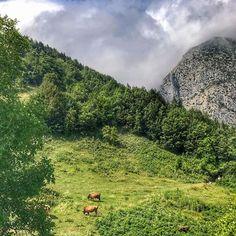 Misss gibi günaydın... . . . . #goodmorning #turkey #turkishfollowers #ig_turkey #ig_eurasia #ig_europe #turkshutter #instagramturkey #turkinstagram #allshotsturkey #instagram_turkey #bestofturkey #colorful #colors_of_day #travelphotography #natgeo #capture #nature #naturelover #natureshots #theworldshotz #bigshotz #ig_world_photo #landscape #bir_dakika #turkportal #kadrajimdan #anadolugram #objektifimden #turkobjektif_perfect