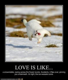 Love is like a snowmobile, racing across the frozen tundra. Suddenly, it flips over, pinning you underneath. At night, the ice weasels come.