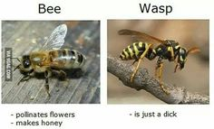 Wasps are dicks