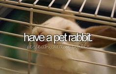 Leia. Miss you baby rabbit.