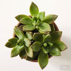 Make wedding centerpieces do double-duty as cute party favors. Plant simple succulents in mini pots and encourage guests to take them home. The low-maintenance plants are perfect for office desks, kitchen counters, and even coffee tables./