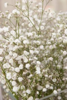 Plant some baby's breath seeds in your organic flower garden on the west coast. Learn about growing Baby's Breath Gypsophila Seeds in our How to Grow instructions. Growing Flowers, Planting Flowers, Organic Gardening, Gardening Tips, Gypsophila Elegans, White Flowers, Beautiful Flowers, Fresh Flowers, Babys Breath Flowers
