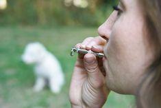 Notre produit : Commencer avec le sifflet pour le dressage de son chien  Catégorie : post  Description :  L'entraînement au sifflet est un moyen efficace de développer le contrôle de votre chien lorsqu'il est physiquement hors de vue ou hors de portée d'une commande vocale. Les chiens de travail comme les chiens de chasse, les chiens de recherche et de sauvetage et les chiens d'exposition ont souvent besoin d'avoir de nombreuses façons de communiquer avec leur maître. L'entraînement au…