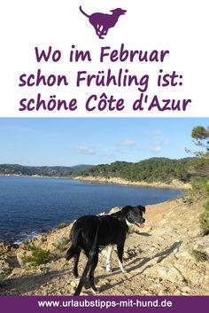 Tolle Fotos von einem traumhaften Urlaub mit Hund in Frankreich im Winter an der Côte d'Azur