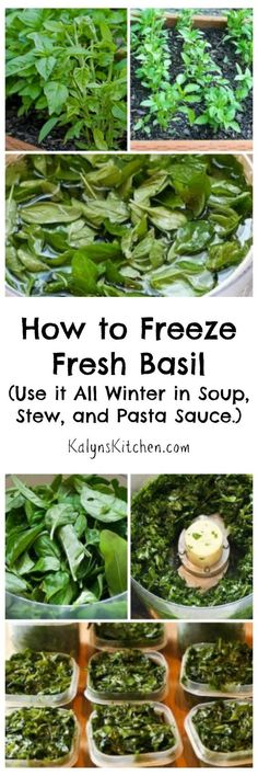 How to Freeze Fresh Basil and Ideas for Using Frozen Basil - For years and years I've been trimming my garden basil, freezing it, and then using the basil all - Herb Recipes, Healthy Recipes, Canning Recipes, Fresh Basil Recipes, Diet Recipes, Potato Recipes, Recipies, Freezing Basil, How To Freeze Basil