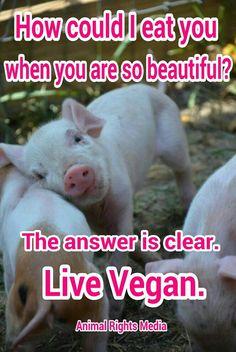 Please. Go Vegan. #friendsnotfood
