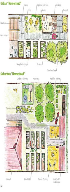 Urban and Suburban Homestead // The top one is good for very small square footage, and the other is good for a normal plot of land in SoCal. :) Urban and Suburban Homestead Plan Potager, Homestead Layout, Espalier Fruit Trees, Farm Layout, Vertical Farming, Urban Homesteading, Backyard Farming, Traditional Landscape, Hobby Farms