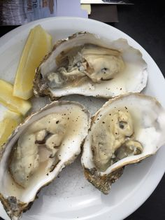 Fresh oysters from Zeeland, Netherlands