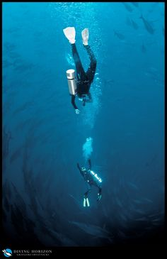 WTH are they doing?  Divers reply...