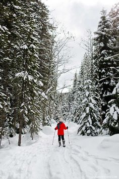 Trillium Lake Snowshoeing - This is one the best beginner spots for snowshoeing near portland. It's only an hour away and in the Mt Hood Territory. Check out our guide. // Local Adventurer #trilliumlake #snowshoeing #outdoors #oregon #pnw #pacificnorthwest