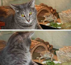 funny-animal-photobombs-16__880