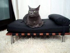 Modern pet day bed and lounger by ModPet