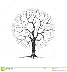 southern live oak drawing - Google Search