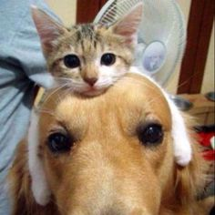 A lovely cat and dog.