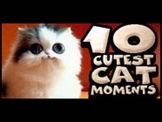 10 Cutest Cat Moments -  #animals #animal #pet #cat #cats #cute #pets #animales #tagsforlikes #catlover #funnycats The clips for this compilation of cute cat bloopers, etc. is one of our favorite videos.   - #Cats