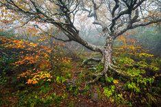The Tree of Life - B