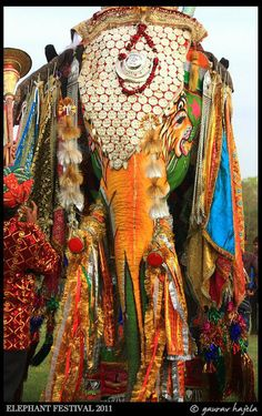 ELEFANTES ADORNADOS - Painted indian elephant festival