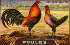 Down On The Farm, Vintage Illustrations, Animals, Hens, Animales, Animaux, Animal, Animais