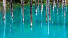 「青い池」は、北海道美瑛の白金温泉から車で5分ほどの場所にある、突如生まれた人造池。概念としては「水たまり」とされているため、正式に池として地図に青く記されることはありません。偶然生まれた白碧の水 この池は、防災のため十勝岳の火山泥流を貯め