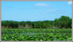Danube Delta - pure nature