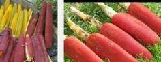 manfaat buah merah