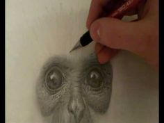 How to Draw Animal Fur - Pencil Realism