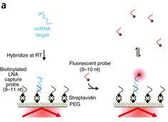 BioTechniques - RNA Fingerprints Enable Early Disease Detection