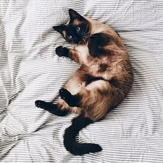 ♛ pinterest: @Belladirubbo ♛ Tap the link Now -  The Best Cat Products We Found Worldw