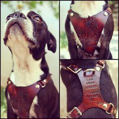 Leather Dog Harness - Custom Leather Hand Tooled Dog Harness - Balanced for Most Comfort - Personalized with Pets Name - Phone Number & Leather Carving, Leather Art, Custom Leather, Leather Design, Leather Tooling, Tooled Leather, Handmade Leather, Leather Jewelry, Real Leather