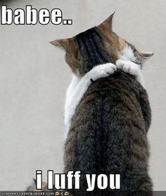 I LUFF YOU Visit us for more.... @ http://www.fun-time.hub7.info/fc/funny-cats-224