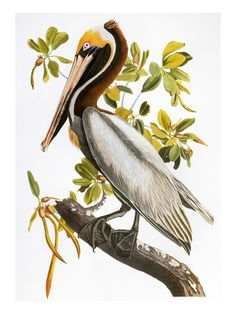 """John James Audubon State Park in Henderson, KY is where you can see one of the world's most expensive notable books - """"Birds of America"""""""