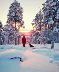 Finnish Lapphund enjoying some winter magic in Rovaniemi, Lapland, Finland ♡