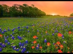 Fésűs Éva : Tavaszi imádság World, Youtube, The World, Youtubers, Youtube Movies, Earth
