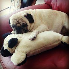 pug cuddling a pug pillow