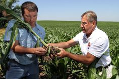 Misgivings About How a Weed Killer Affects the Soil... #sustainableag #biologicalag