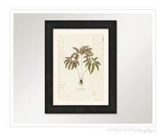 Planta helecho botánico Vintage en francés Ephemera por OrangeTail