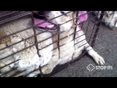 Click to watch undercover videos from the Jeju's dog meat industry: https://youtu.be/UFBbEhwphDQ http://youtu.be/FsUD8T04DfI We took action to speak out against the Jeju's horrendous cruelty (http://koreandogs.org/petition-letters-mailed-gov-brown/) but that's not enough. We need your help. Please take quick actions to speak out against the nightmarish Jeju's cruelty to the defenseless animals. Pls sign the petitions! Click to take action today: http://koreandogs.org/contact-gov-jerry-brown…
