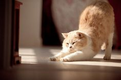 Morning stretches help me stay in shape via Tumblr #cats