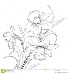 Image from http://thumbs.dreamstime.com/z/daffodil-flower-narcissus-isolated-white-38176534.jpg.