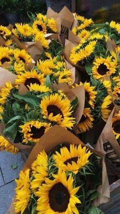 30 Ideas for wallpaper celular flores girasol Yellow Flowers, Beautiful Flowers, Yellow Flower Arrangements, Sunflower Wallpaper, Flower Aesthetic, Boxing Day, Landscape Illustration, Illustration Art, Mellow Yellow