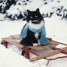 Ready for a winter sled ride