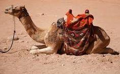 Resultado de imagen para camello acostado Camel, Animals, Pictures, Nativity Sets, Animales, Animaux, Camels, Animal, Animais
