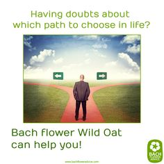 Having doubts about which path to choose in life? Bach Flower Wild Oat can help you! #wildoat #bachflowerremedies #Bachflowers